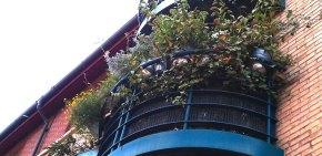 A street view of my Wildlife Garden Balcony